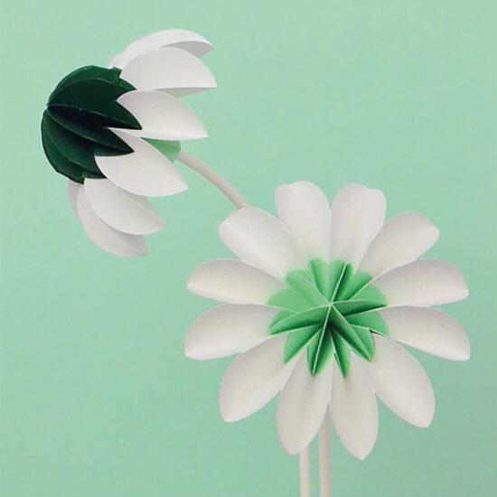 paper flowers lente